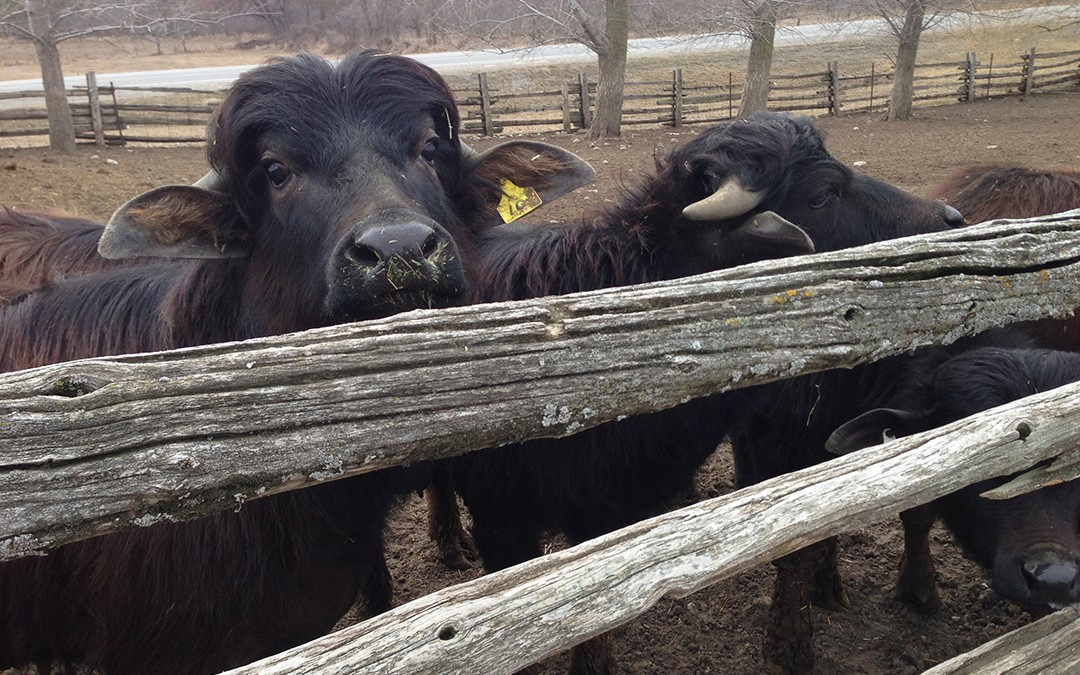 Quinte Farm Tour
